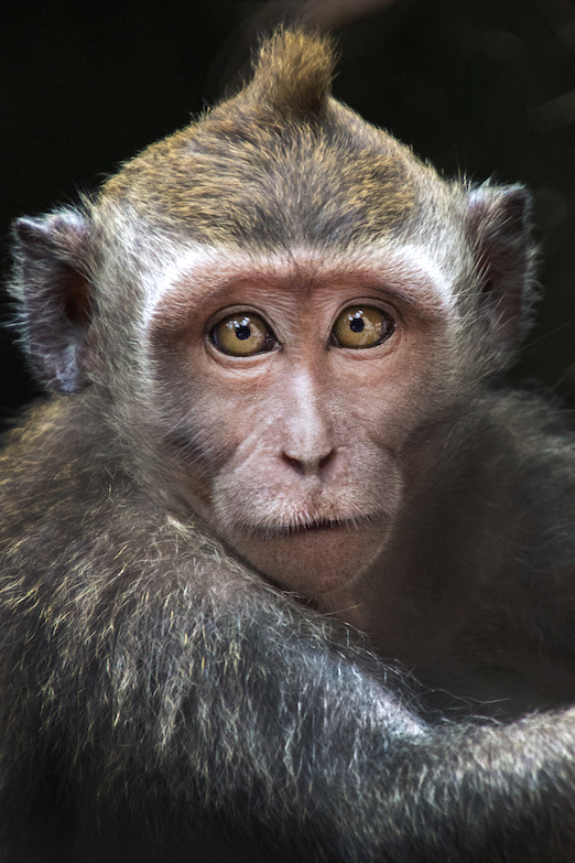 Baby unfazed by intimidating monkey
